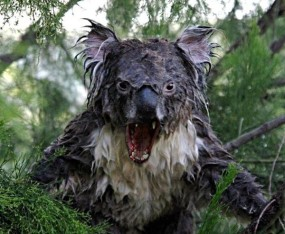 australia-koala-we-happy-few-banned-the splintering